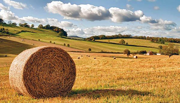 можно ли земли сельхозназначения