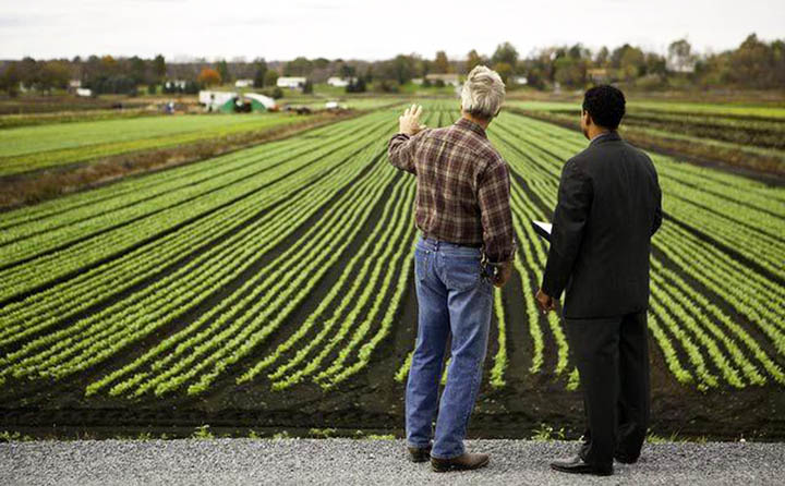 Как проверить земельный участок перед покупкой? На что обратить внимание