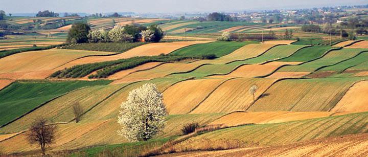 Как перевести землю сельхозназначения в категорию ИЖС? Стоимость перевода