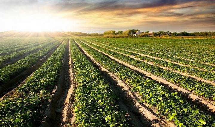 Земли сельхозугодий. Их состав и особенности использования