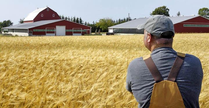Стать фермером. Как открыть фермерское хозяйство (КФХ) в Московской области?