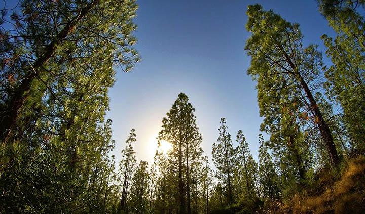 Аренда земель лесного фонда. Стоит ли игра свеч?