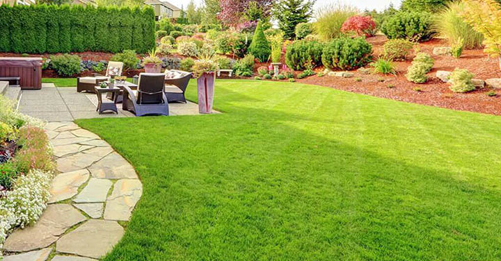 Красивый газон на участке. Как правильно его сделать?
