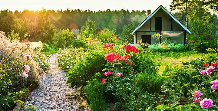 Создаем новый газон на своем участке. Правильное место, тип и время