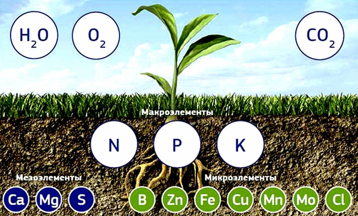 Почему важно знать качество почвы на вашем участке?