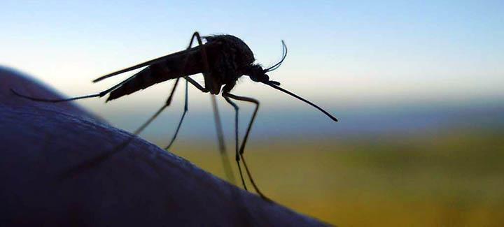 Как эффективно избавиться от комаров на дачном участке?