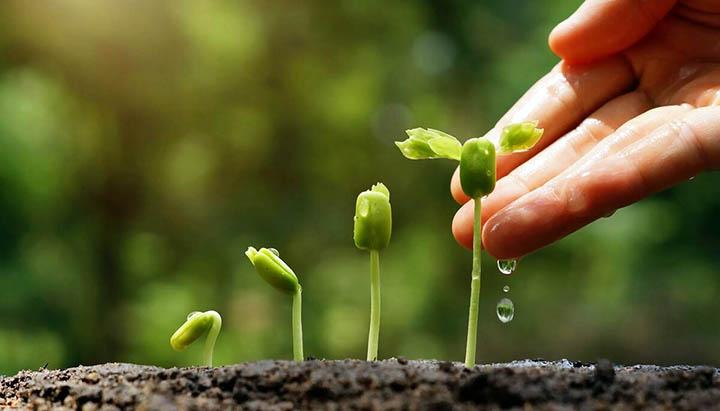 Как правильно садить семена на участке? Технологии посева цветов