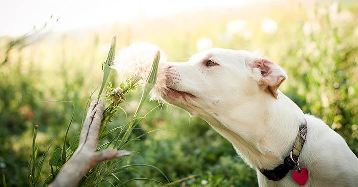 Не садите это на участке! Опасные растения для домашних животных