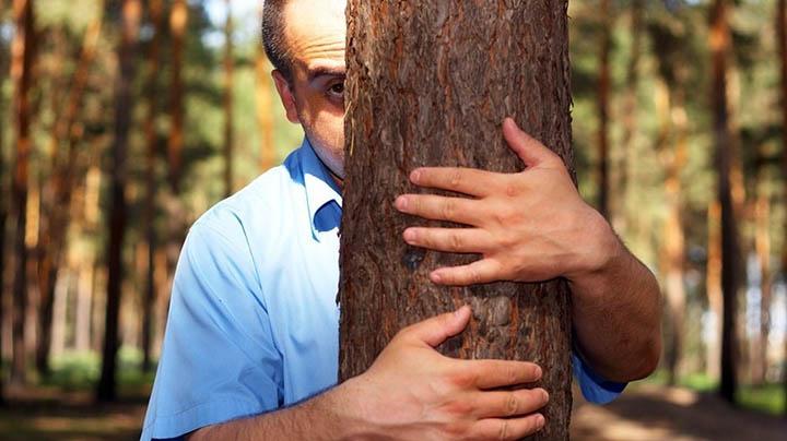 Как зарядиться энергией от ...леса и деревьев?