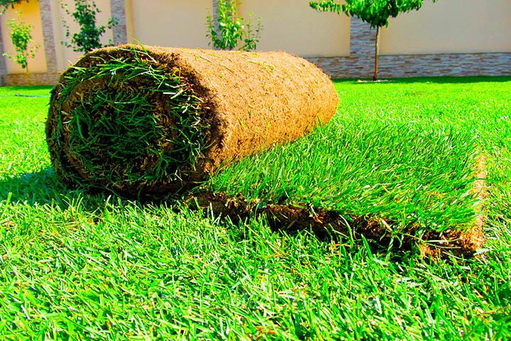 Популярность рулонных газонов. С чем она связана? И как их выбрать?