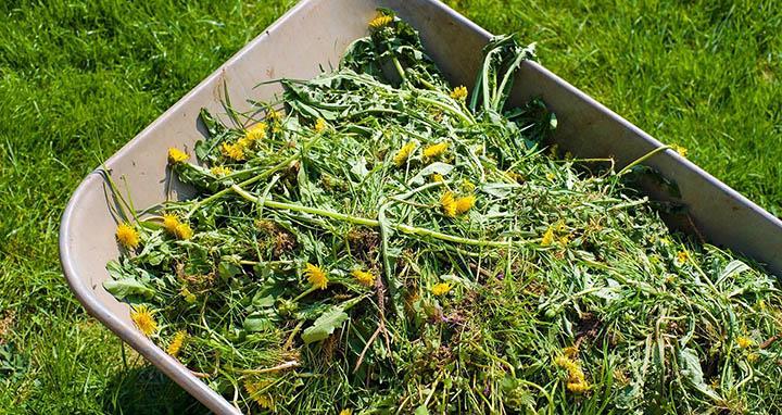 Как избавиться от сорняков с помощью геотекстиля?